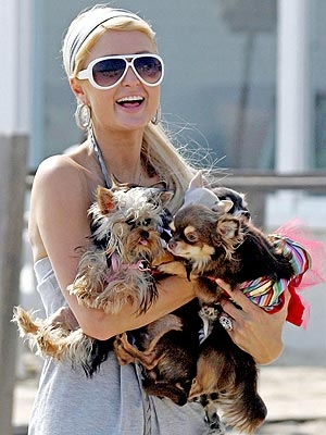 paris_hilton_dogs_300x400